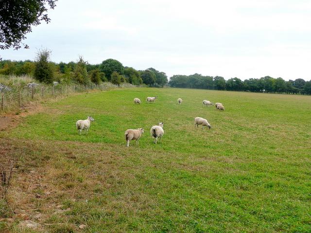 Cotswold pasture
