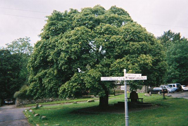 Maple tree at Elterwater Village