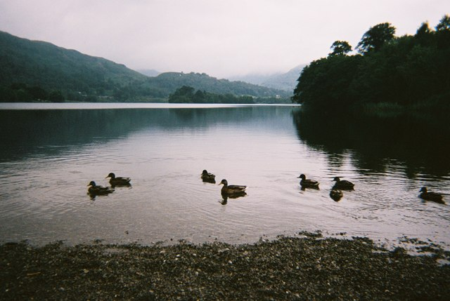 Ducks on Grasmere