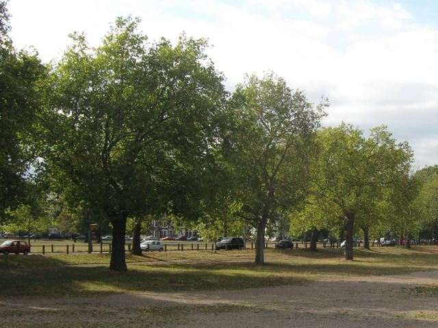 Trees along the South Circular Road over Clapham Common