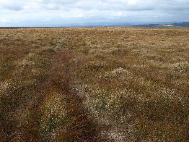 Raised bog above Shavercombe Head