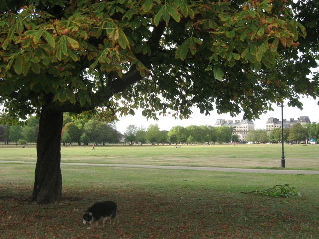 Under the spreading chestnut tree, on Clapham Common