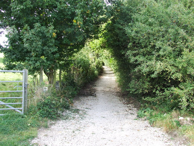 Old road from Seven Springs to Leckhampton.