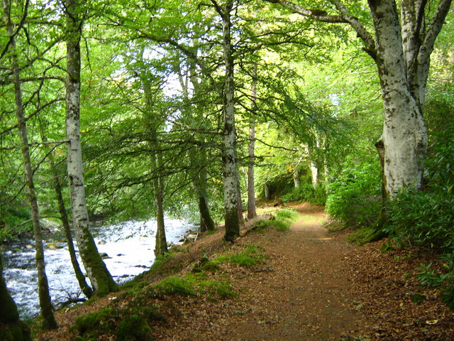 Riverside path and beech trees