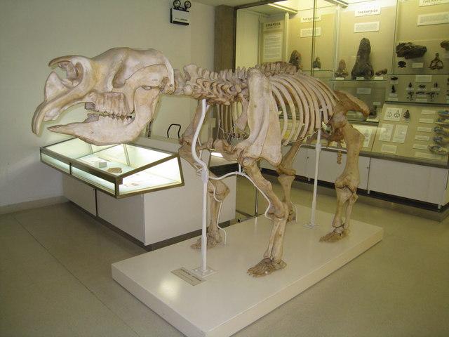 Diprotodon Australis