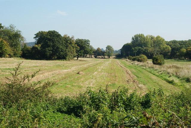 View Towards Artington, Surrey