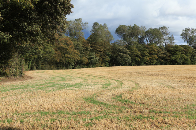 Woodland near Nether Lennie