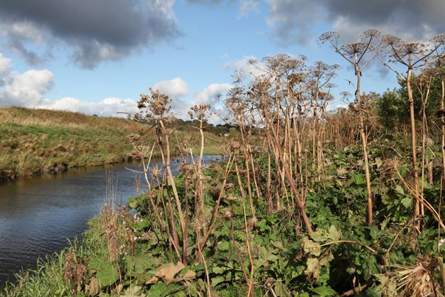 Vegetation alongside the River Almond