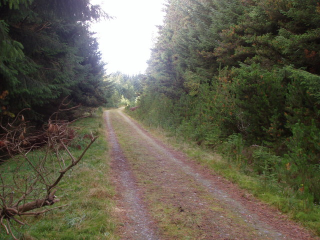 Track through Gartly Moor Forest