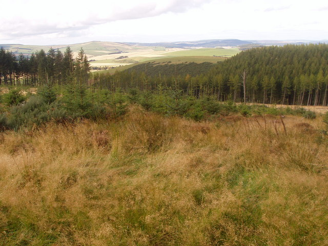 Part of Gartly Moor Forest