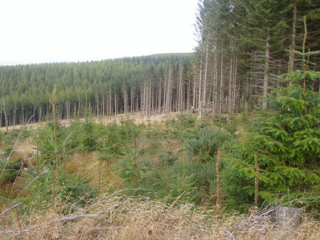 Forestry on Gartly Moor