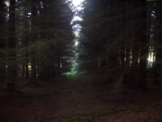 Firebreak in the forest