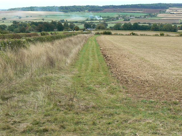 Field margin, Pudlicote Lane, near Chipping Norton
