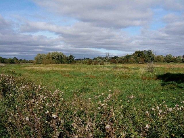 Northwick Marsh SSSI, Worcester