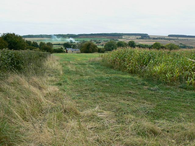Maize crop, Pudlicote Lane, near Chipping Norton