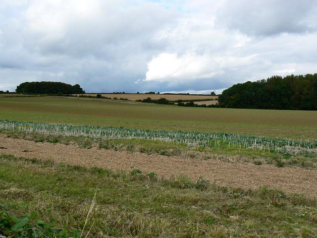 Field, Pudlicote Lane, near Chipping Norton