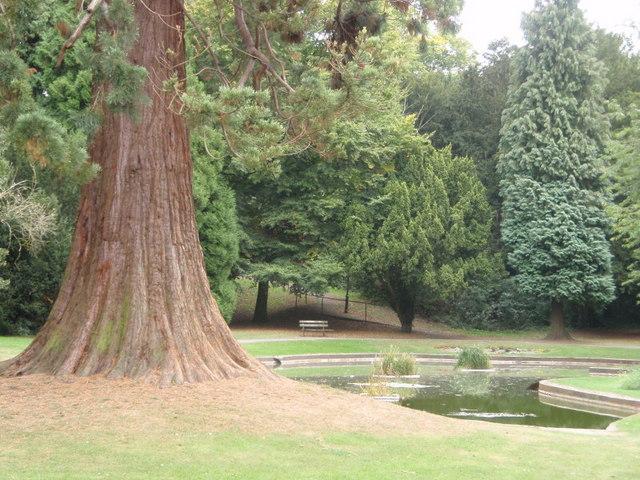 Pond in Tring Memorial Park