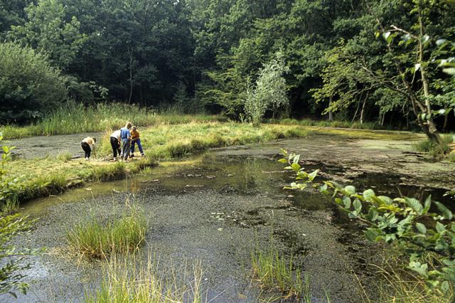 Shotgate pond in the nineties