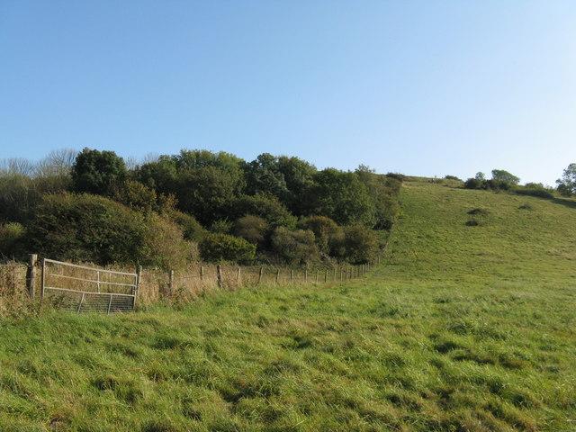 NW escarpment of Cissbury Ring