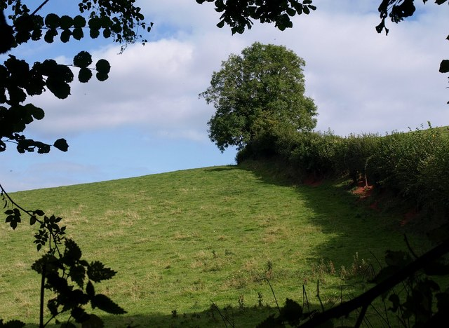Oak above Woodpark Lane