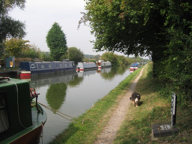 Grand Union Canal: Between New Ground and Cow Roast