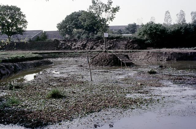 Thundersley pond before filling