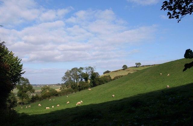 Field at South Whilborough