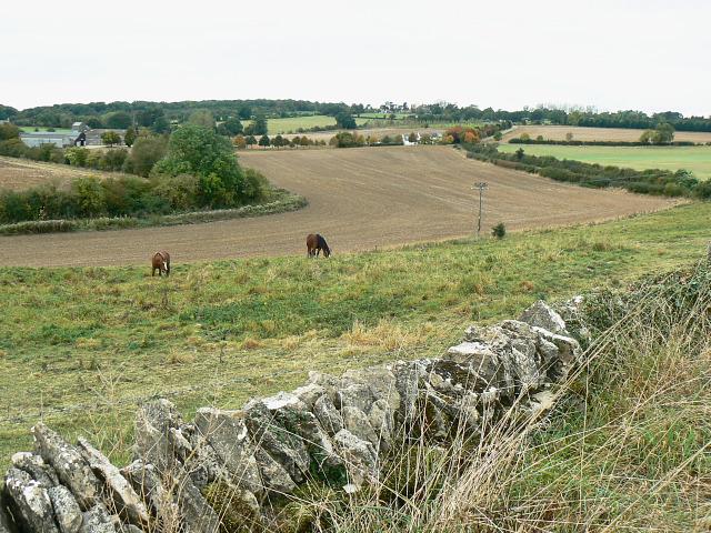 Field boundary, east of Bridewell Farm, East End, Witney