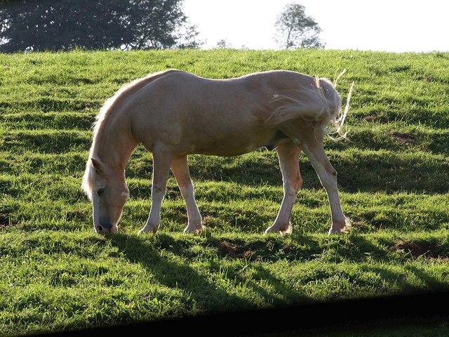 Animal grazing