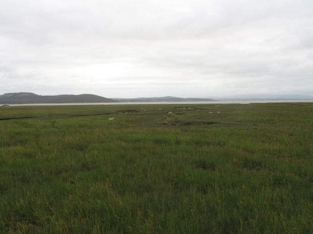 Salt Marsh at Grange-over-Sands