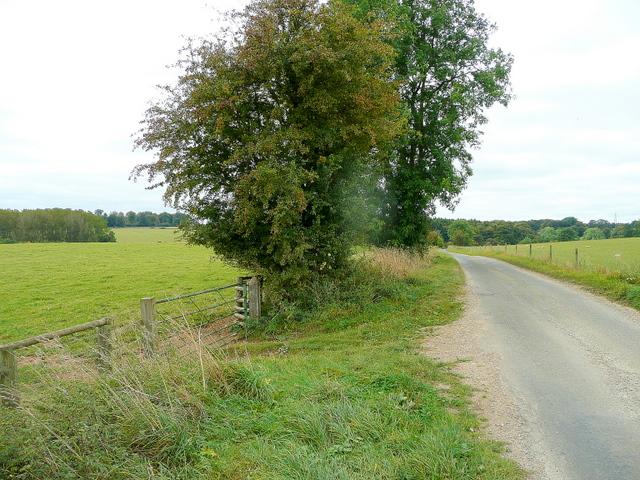 Lane to Eastington