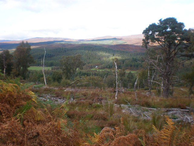 Looking down on Balintombuie from Inverwick Forest