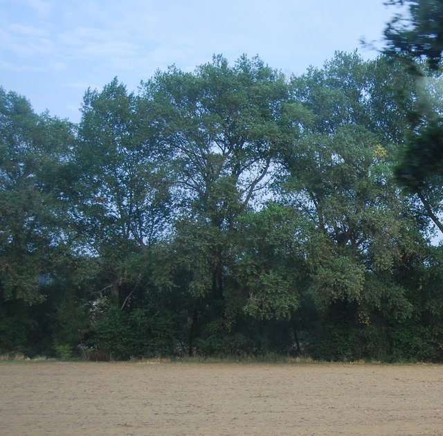 Trees along the Medway