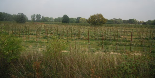 Orchard by the Medway Valley Line