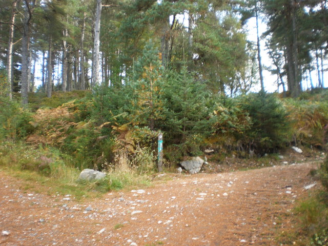 Drovers road leaves Forest Track to go north