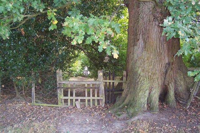 Broken Stile on High Weald Landscape Trail