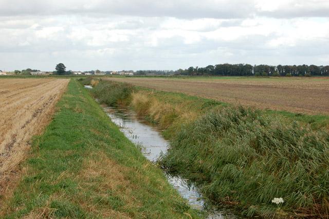 A fenland ditch on Harris Farm