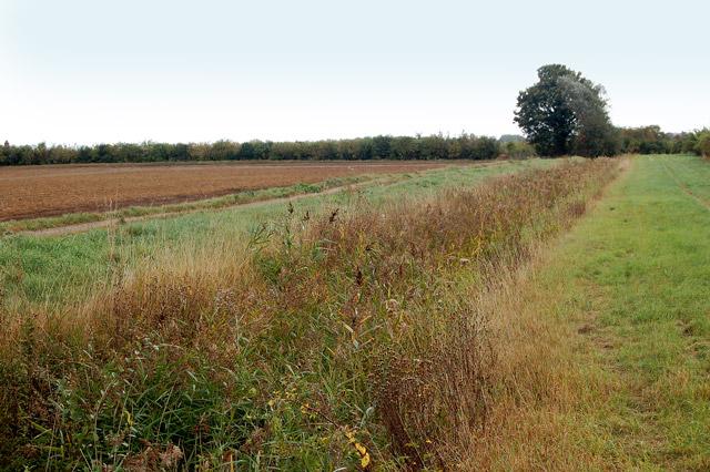A drainage ditch on Poplar Farm