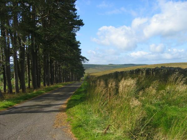 Road to Falstone