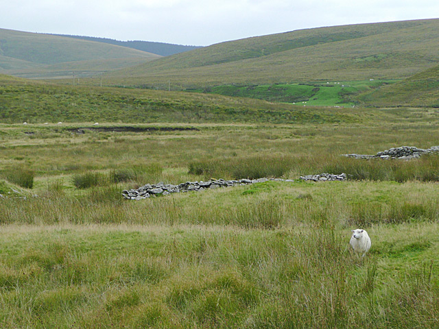 Ruins and the Camddwr valley, Ceredigion