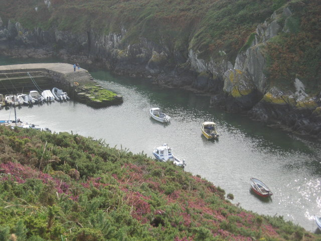 Boats moored afloat in Porth Clais