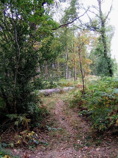 Footpath through the Wyre Forest