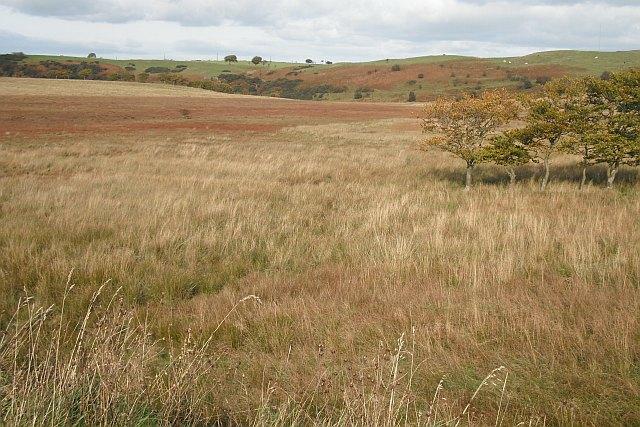 Marshland upstream of Roughrigg Reservoir