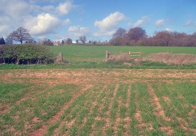 Arable land at Grendon Manor Farm