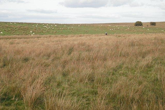 Wet ground by Roughrigg Reservoir