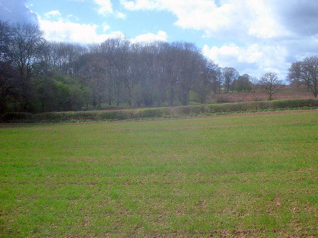 Arable land near Newbury Farm