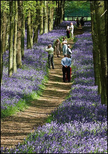 Dockey Wood in Ashridge Common