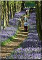 SP9714 : Dockey Wood in Ashridge Common by Cameraman