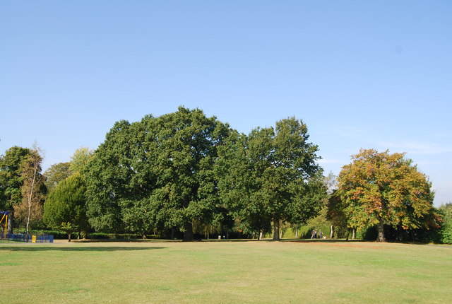 Trees, St John's Recreation Ground