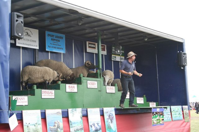 It's the sheep show